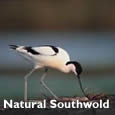 Natural Southwold